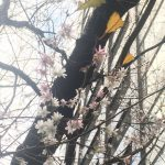 冬に咲く花~スタッフエピソード~