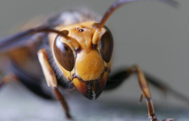 蜂から学ばされた役割の尊さ  〜天命としての役割に生きる〜